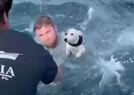 Video of Dog Rescue at Sea Goes Viral